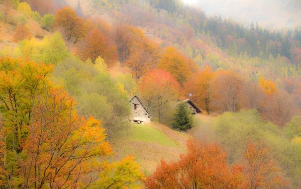 Цитаты и картинки про осень | Осень, Картинки, Счастье