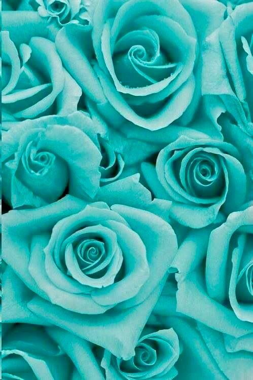 Pin By Lola K Deaton On Tiffany Blue Pinterest Flowers Roses And Turquoise