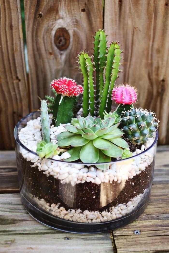 ▷ 1001 + modèles de terrarium plante en bocal fermé ou ouvert