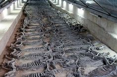 Archaeologists Unearth Gruesome Site Where #Chinese Emperors Sacrificed #Horses