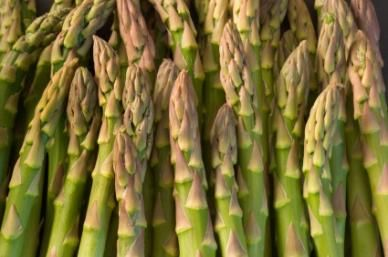 """Asparagus Seeds - """"Mary Washington"""" HEIRLOOM"""