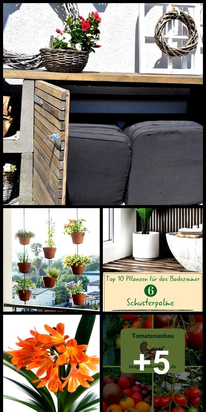 How Houseplant Clivie Clivia Comes To Bloom Every Year House Plants Vertical Garden Diy Bloom
