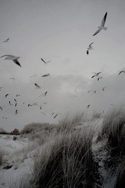 #winter #nature #mist #seagull #photography