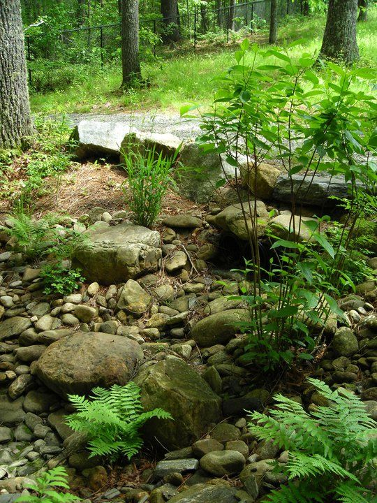 Rain Garden with rocks and ferns. Looks like water runs off the path, and down through the rocks.