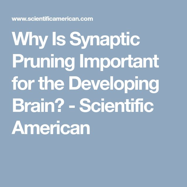 Why Is Synaptic Pruning Important for the Developing Brain? - Scientific American
