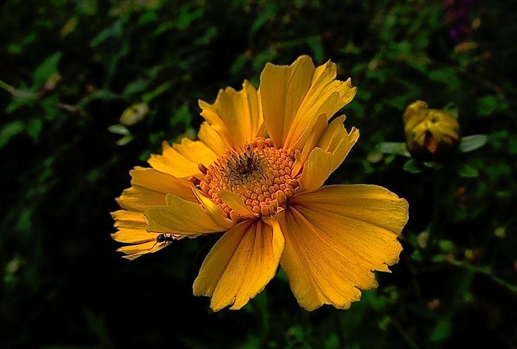 Blog z fotgrafiami wykonamymi CANONEM. Fotografie krajobrazu,kwiatów, dróg ,drzew. Manipulacje kolorem ,fotografie czarno-białe.