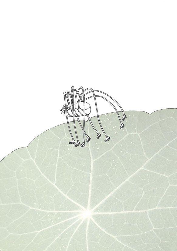 """rollerskating harvestman"", Stanislaus Medan, 2014 #animals #park #grafic #children #drawing #collage #fotocollage #harvestman #rollerskating #nasturtium"