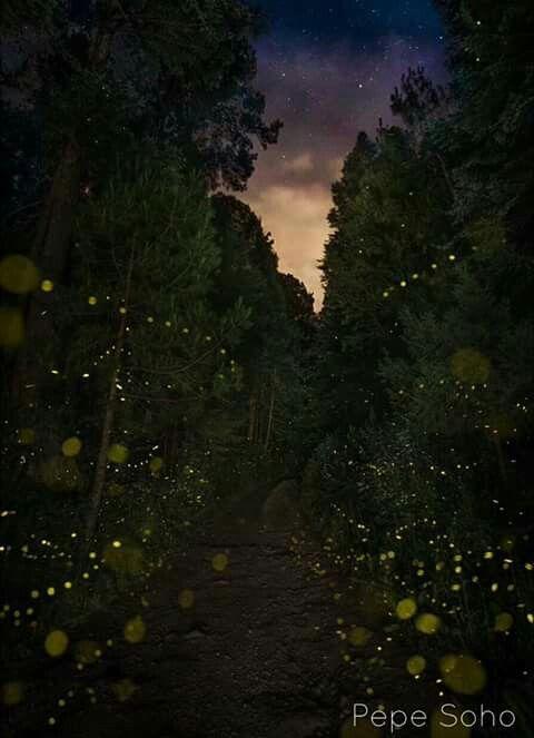 Santuario de las luciernagas, Tlaxcala, México.
