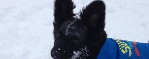 Abused dog left to die in the woods going home with police officer who saved him » DogHeirs | Where Dogs Are Family « Keywords: Ludlow, Mass...
