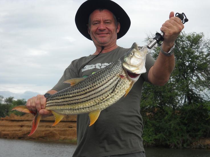 Tiger fishing on the Lower Zambezi River