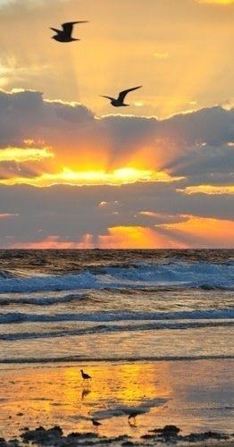Lever de soleil qui sonne le début de la danse des bécassines dans le mouvement de ses vagues qui vont et viennent et qui le feront encore pour des siècles pendant que nous nous bercerons d'éternité.