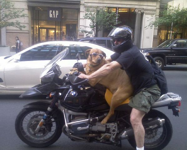 dogs riding motorcycles