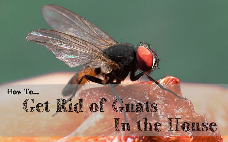 25 Best Ideas About Gnats In Kitchen On Pinterest Fruit