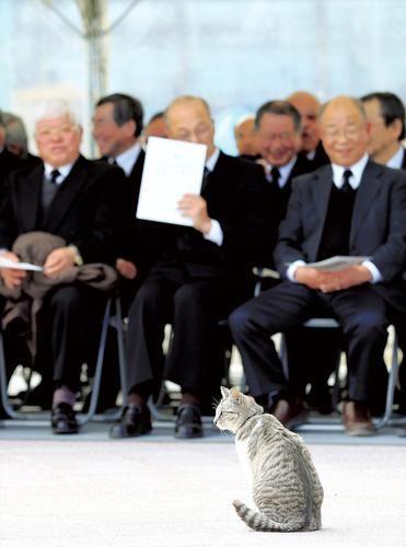 ◇…宮城県山元町で11日にあった東日本大震災の犠牲者を悼む慰霊碑の除幕式。遺族や町関係者が硬い表情で居並ぶ中、1匹の猫が現れた。  ◇…近所の飼い猫とみられ、