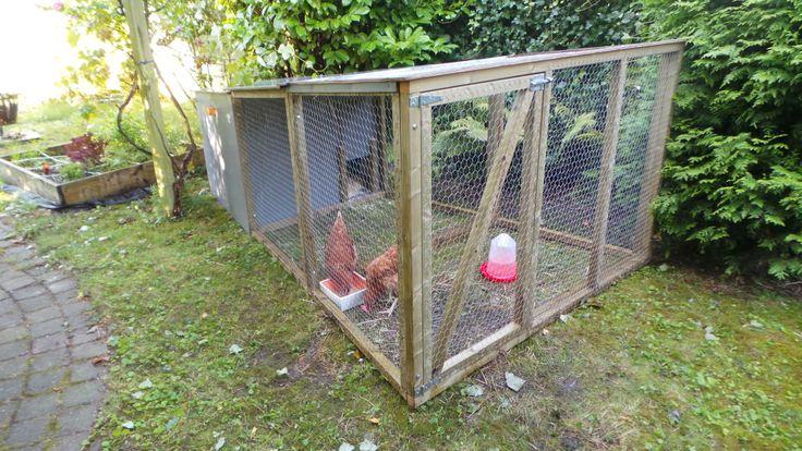 Onze kippen en het Kipster kippenhok (gemaakt rn ontworpen door #VerdraaidGoed) zijn inmiddels gearriveerd! Aan de slag en alles leren over #kippenhouden :)