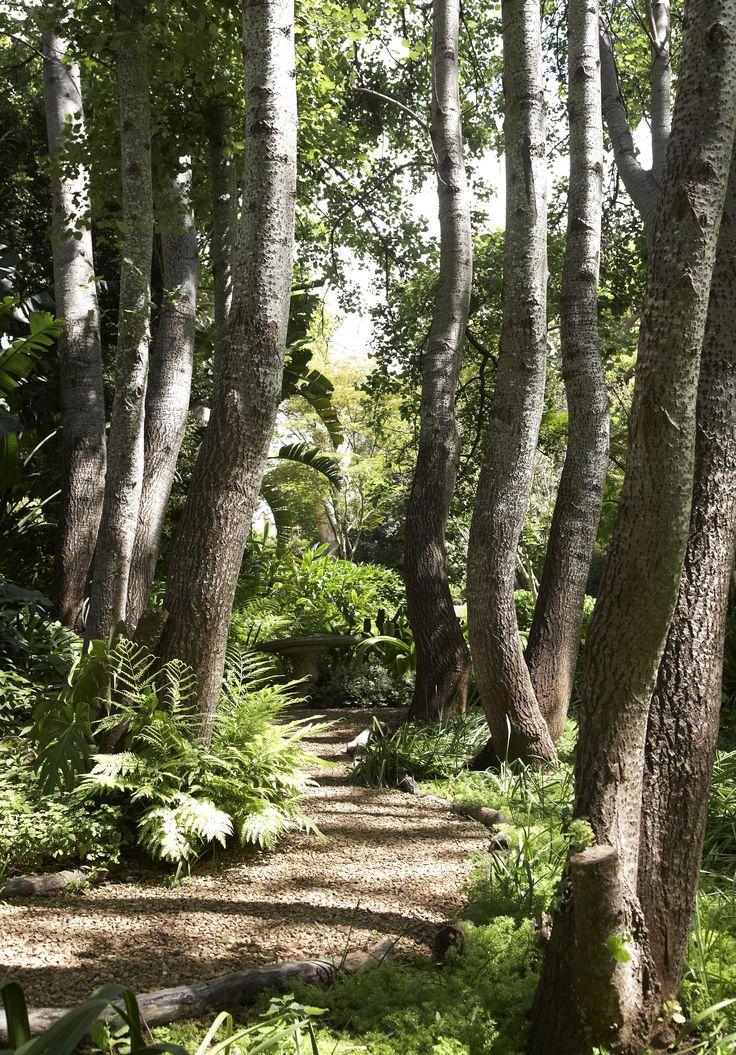 The Camphor Walk