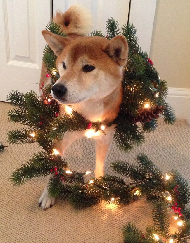 20 Times Dogs Wore It Better Than Christmas Trees