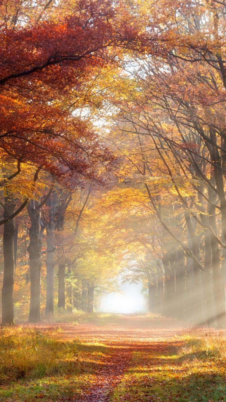 14 Iphone Wallpapers To Fall In Love With Autumn Preppy Wallpapers Iphone Wallpaper Fall Fall Wallpaper Preppy Wallpaper