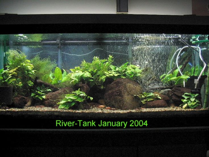 17 best images about river themed freshwater tank on for Freshwater fish tank setup