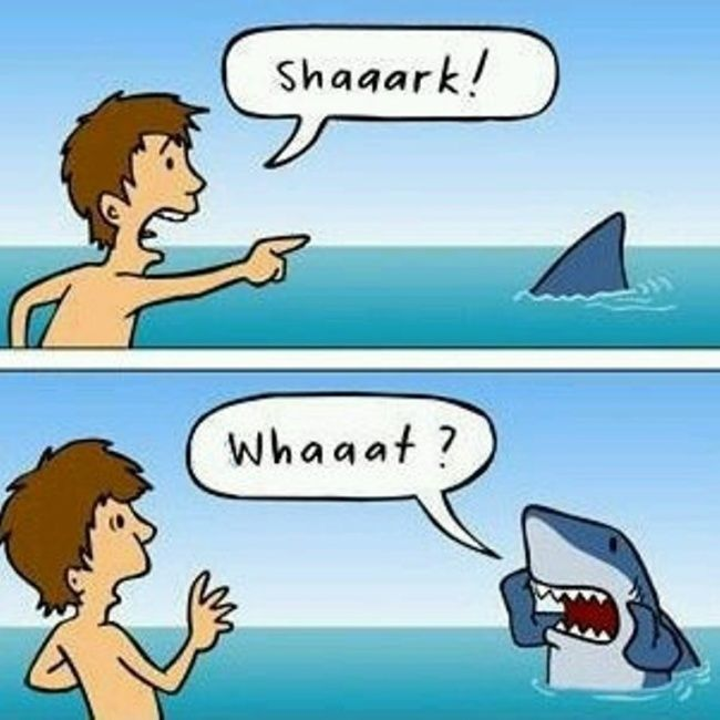 PMS & Shark Week Humor