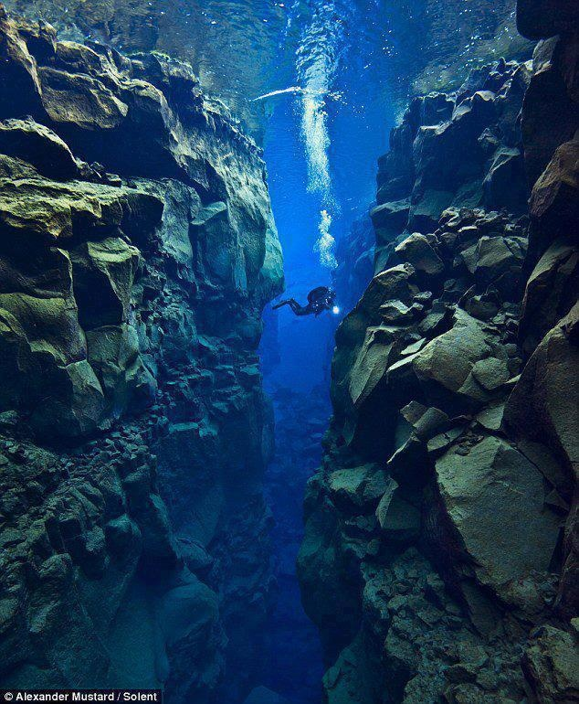 In the gap between the North American and Eurasian tectonic plates  I want to dive here someday. Thanks Marie. She just told me about this dive in Iceland yesterday. Said it was 38 degrees F.