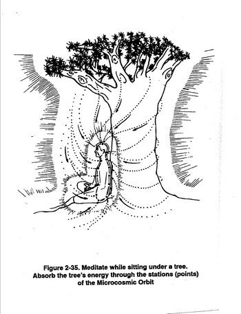 Meditate While Sitting Under a Tree
