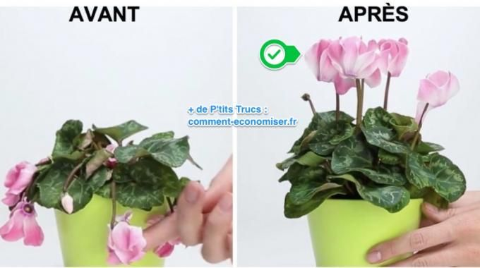 Vous avez une plante ou une fleur en mauvais état ? Et vous ne savez pas quoi faire pour la sauver ? Pas besoin d'acheter d'engrais chimique ! Découvrez l'astuce ici : http://www.comment-economiser.fr/astuce-geniale-pour-sauver-une-plante-en-mauvais-etat.html?utm_content=buffer58422&utm_medium=social&utm_source=pinterest.com&utm_campaign=buffer