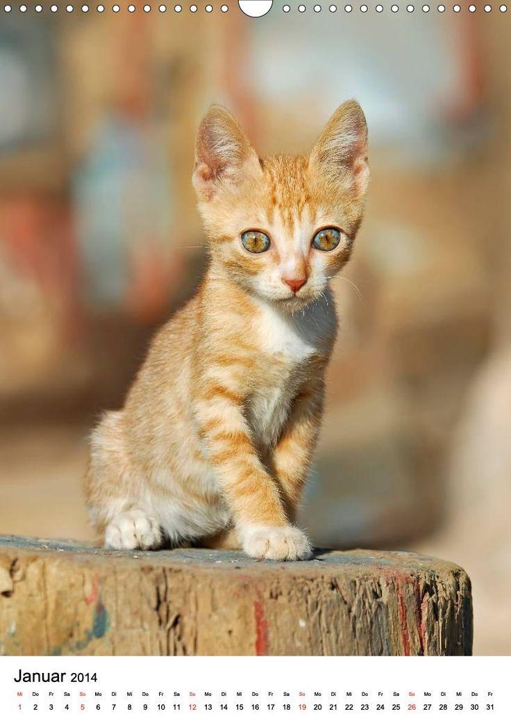 COUNTRY CATS, Calvendo Kalender, a calendar 2014 for #cat lovers. #catlovers photographed by Katho Menden. Bezaubernde Katzen fotografiert auf dem Land und in Bauerngärten. #Calvendo