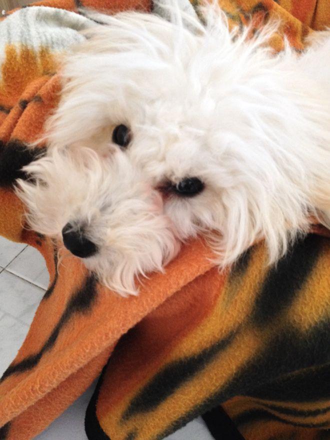 my puppy Sofie <3