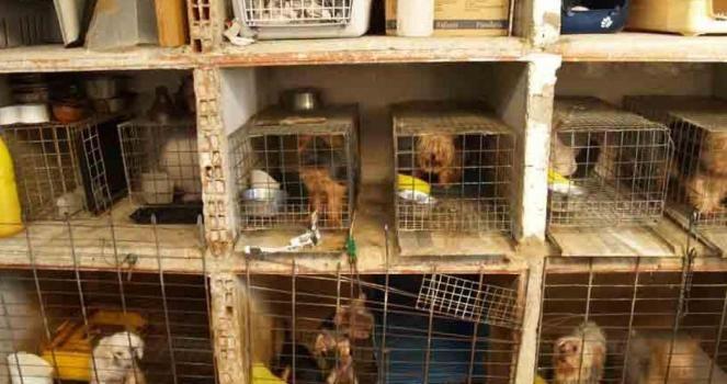 No a la venta de mascotas por Internet