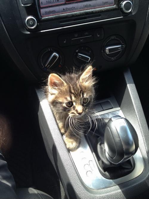 Ausflug mit der Katze