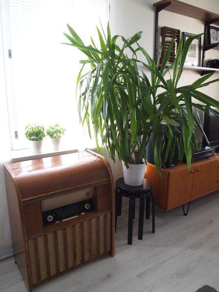 levysoitin,jakkarat,vanhat kalusteet,kasvi,60-luku