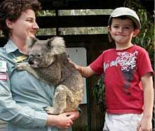 Blackbutt Reserve--you can book a private encounter with a koala!