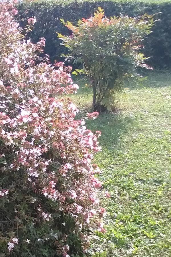 Arbusti Ornamentali Da Giardino Piante Da Esterni Giardino Arbusti