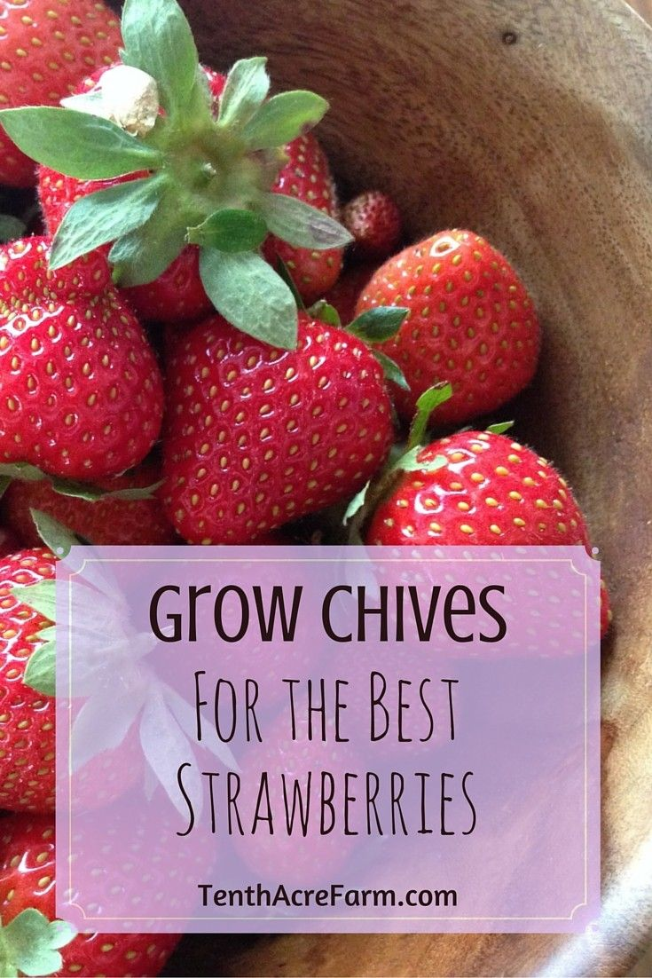 how to make strawberry flowers