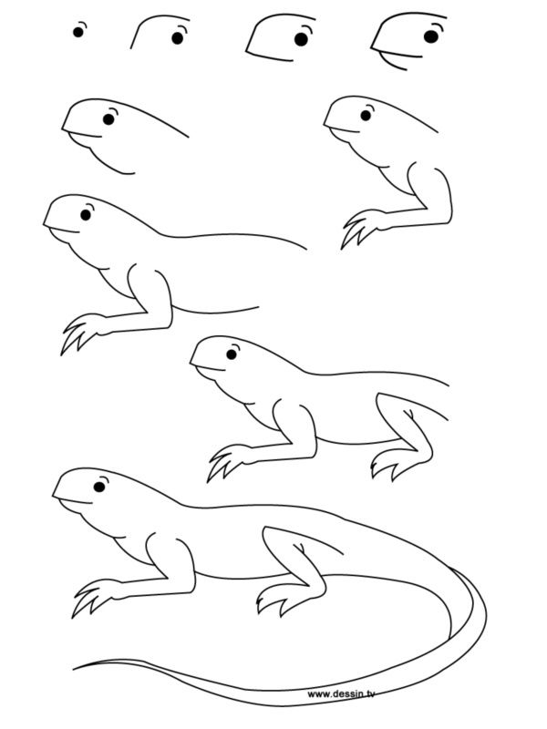 How To Draw Easy Animals Step By Step Image Guide Easy Drawings Easy Animals Lizard Craft