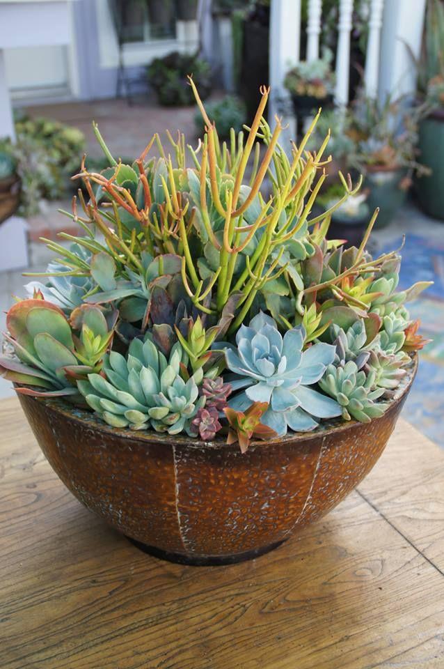 840 Best Images About Succulents Arrangement Ideas On