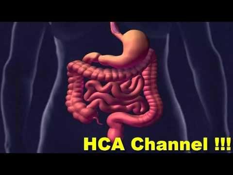 Candida intestinale e dieta