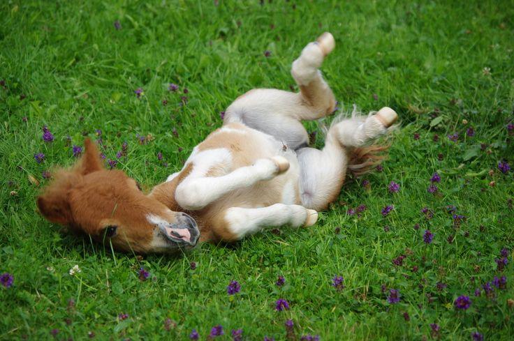 Baby Pony 3 Wochen alt - Bild & Foto von Chrisi 08 aus Tierkinder - Fotografie (19516486) | fotocommunity