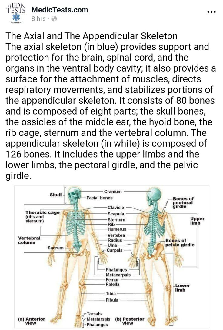 Pin by Outside the Cubicle Art on ems Axial skeleton