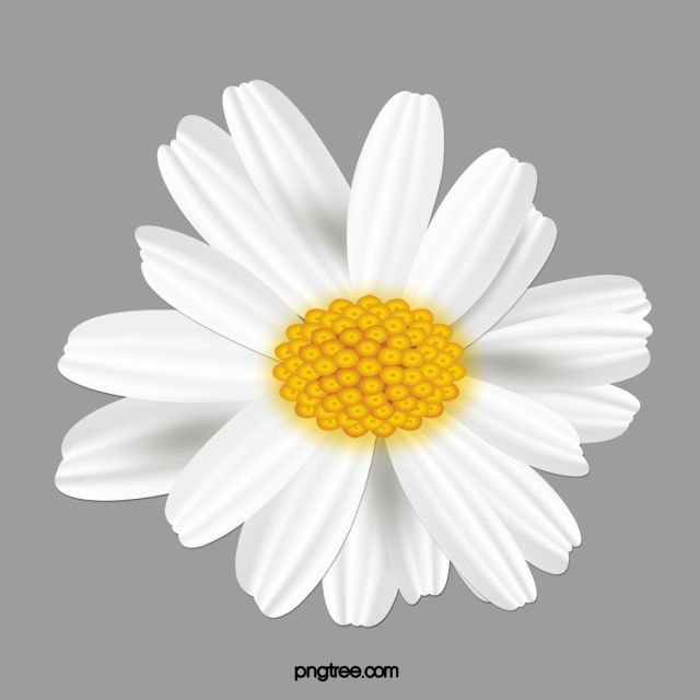 Small Daisy Flower Daisy Clipart Flower Clipart Simple Png Transparent Clipart Image And Psd File For Free Download Flower Clipart Daisy Flower Flower Text
