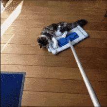 gatinho-limpando-o-chão_