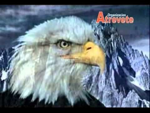 La Renovación del Aguila - [Mejor Edición] - YouTube