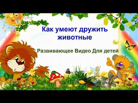 Как умеют дружить #животные/As the animals are able to be friends