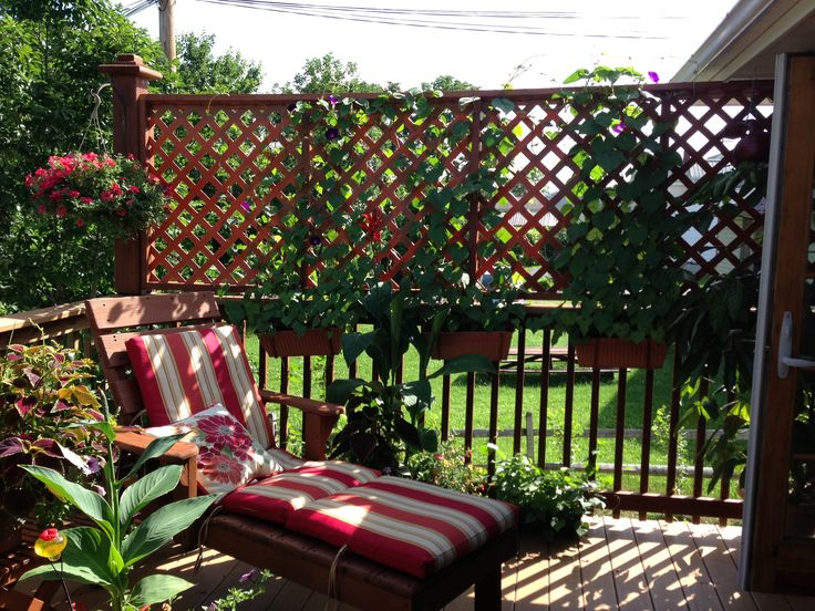 Deck Privacy Lattice And Morning Glories My Projects