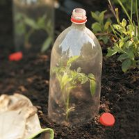 "Two tips from Birds & Blooms for using 2-liter bottles in the garden: ""My seedlings grow better early in the growing season because I cut the bottoms off 2-liter plastic bottles and use the tops to protect the tender sprouts. On warm days, just remove the cap to ventilate"" -Shirley Salyers, Ohio ***"
