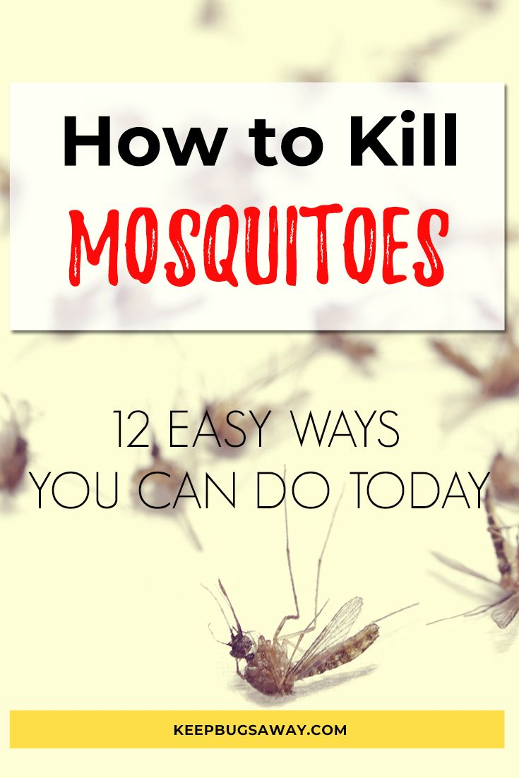 Pin On Get Rid Of Mosquitoes
