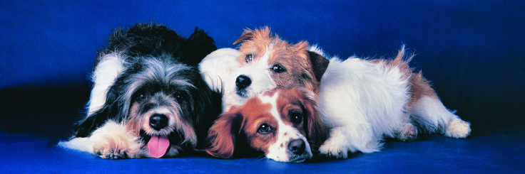 EuroGraphics Dogs Jigsaw Puzzle 750-Piece Puzzle. This delightful puzzle begs the question? Who can resist these cuddly puppies?