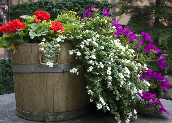 garden barrel flowers