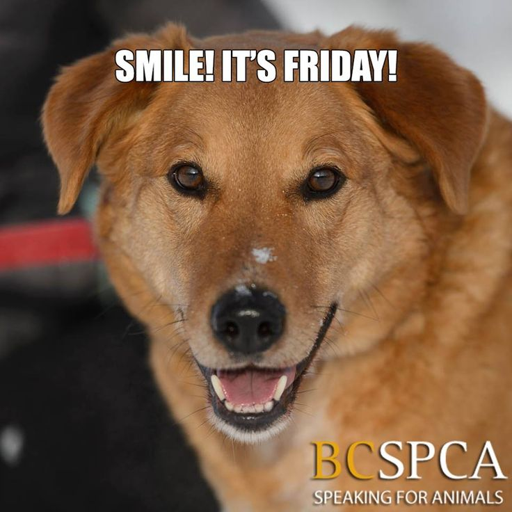 Dogs For Adoption At Kelowna Spca